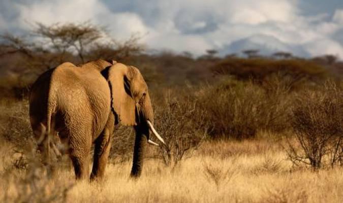 Google au service des éléphants