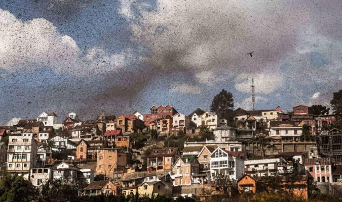 Des millions de sauterelles au coeur d'Antananarivo (Madagascar)