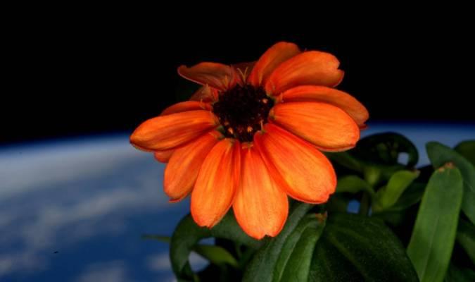 Voici la première fleur de l'espace