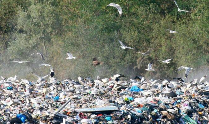 Cigognes des poubelles