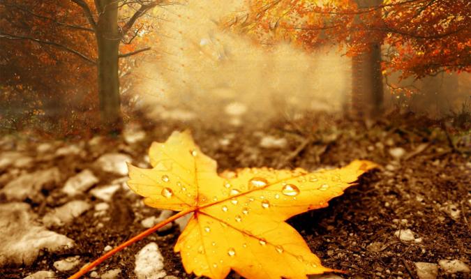 L'automne est le printemps de l'hiver
