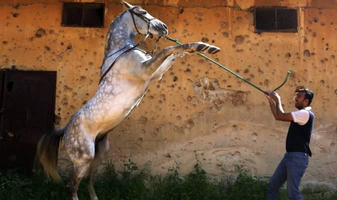 6 octobre, Journée mondiale des animaux